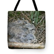 Mourning Dove Chicks Tote Bag