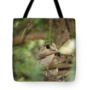 Mourning Dove Nesting Tote Bag
