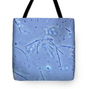 Mouth Bacteria, Lm Tote Bag