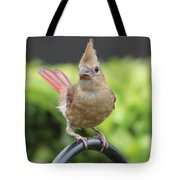Mrs Cardinal Tote Bag by Carol Groenen