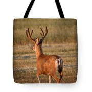 Mule Deer Buck In An Alberta Field Tote Bag