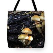 Mushrooms 6 Tote Bag