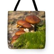 Mushrooms On Fallen Tree Tote Bag