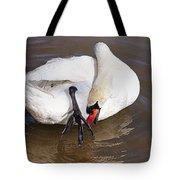 Mute Swan Grooming In Shallow Water 2 Tote Bag