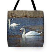 Mute Swans On A Cape Cod Pond - Cygnus Olor - Quissett  Massachusetts Tote Bag