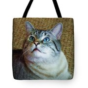 My Beautiful Blue Eyed Tiger Boy Tote Bag