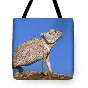 Namaqua Chameleon Chamaeleo Namaquensis Tote Bag