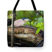 Nankeen Night Heron Tote Bag