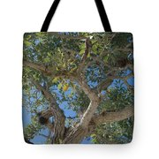 Naples Tree Tote Bag