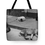 Napping Friends In Valparaiso Tote Bag by Camilla Brattemark