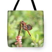 Nature Square - Saddleback Dragonfly Tote Bag