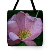Nearly Spent Rose Tote Bag