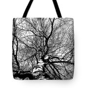 Neighbours Birch ... Tote Bag