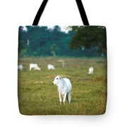Nelore Beef Cattle Tote Bag