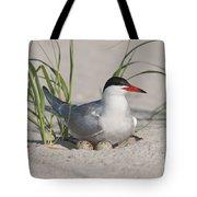 Nesting Common Tern Tote Bag