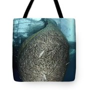 Net Full Of Ikan Puri, A Small Anchovy Tote Bag