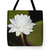 Nocturnal Blossom Of Victoria Lily Tote Bag