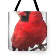 Northern Cardinal Closeup Tote Bag