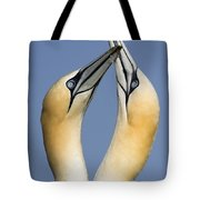 Northern Gannet Morus Bassanus Pair Tote Bag
