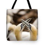 Northern Gannets Morus Bassanus Rubbing Tote Bag