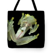 Northern Glassfrog Hyalinobatrachium Tote Bag