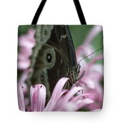 Northern Pearly-eye On Pink Tote Bag