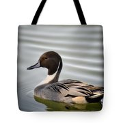 Northern Pintail Duck  Tote Bag