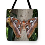 Not A Butterfly But An Atlas Moth Tote Bag
