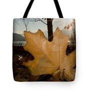 Oak Leaf In Backlight Tote Bag