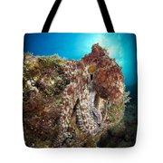Octopus Posing On Reef, La Paz, Mexico Tote Bag