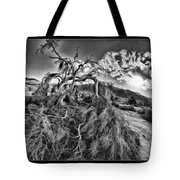 Old Desert Tree Tote Bag