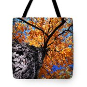 Old Elm Tree In The Fall Tote Bag