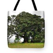 Old Fig Tree - Ficus Carica Tote Bag by Kaye Menner