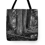 Old Growth Cedar Trees - Montana Tote Bag