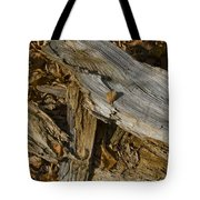 Old Tree Trunks And Leaves Decaying Tote Bag