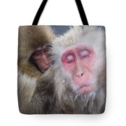 Older Snow Monkey Being Groomed By A Tote Bag