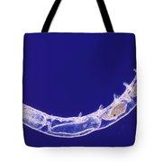 Oligochaete Worm Tote Bag