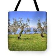 olive grove on Lake Gardan Tote Bag