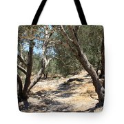 Olive Trees At Sebastia Tote Bag