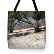 Olive Trees Standing Alone Tote Bag