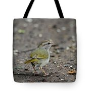 Olivesided Sparrow Tote Bag
