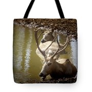 On A Hot Summers Day Tote Bag