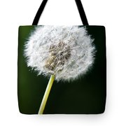 One Dandelion Flower Isolated  Tote Bag