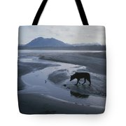One Of Vargas Islands Habituated Wolves Tote Bag