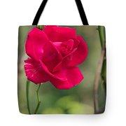 One Rose Tote Bag