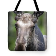 One Year Old Bull Moose With Growing Tote Bag