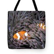 Orange Clownfish In An Anemone Tote Bag