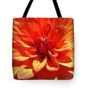 Orange Dahlia  Tote Bag by Daniele Smith