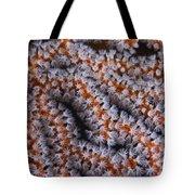 Orange Gorgonian Sea Fan With White Tote Bag