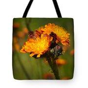 Orange Hawkweed Tote Bag